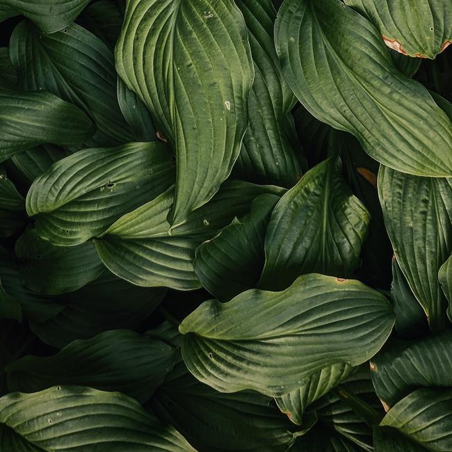 plant-5