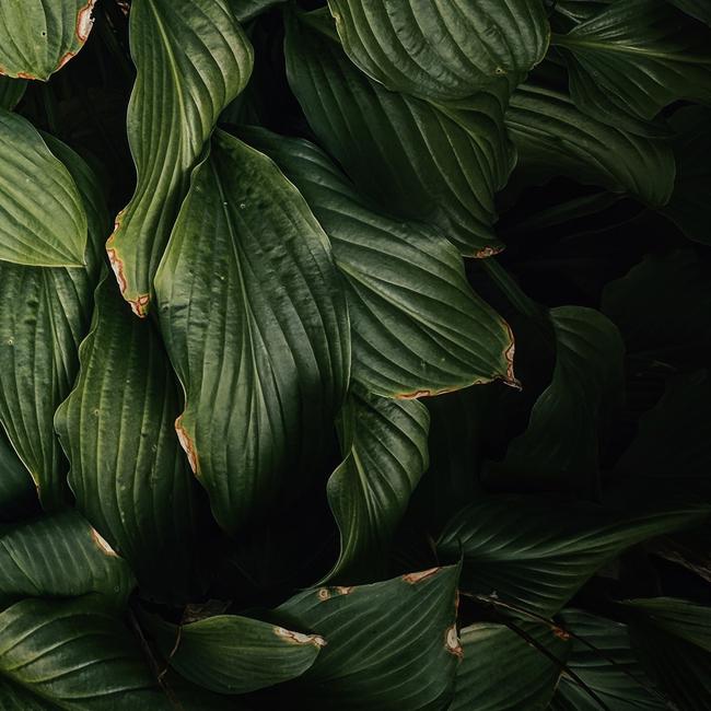 plant-6